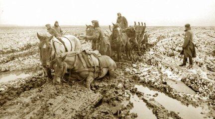 Horses pulling through mud
