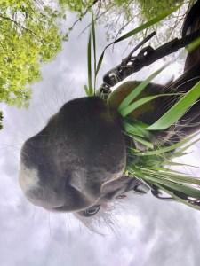 Grass Snack