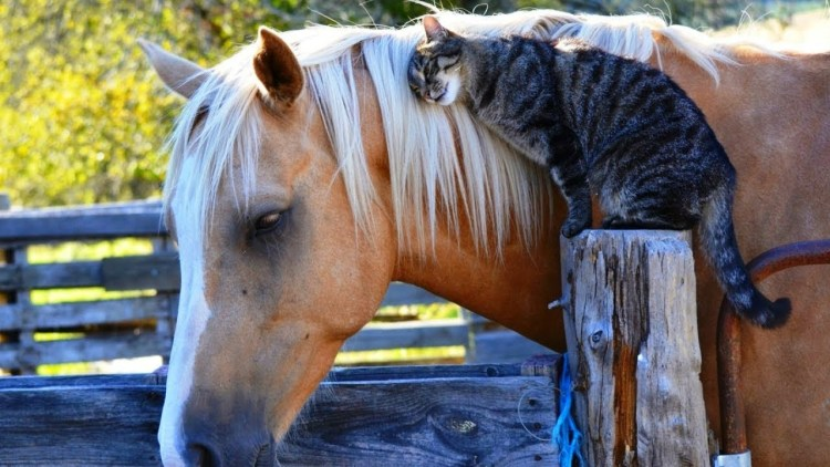 Friends come in different shapes and sizes