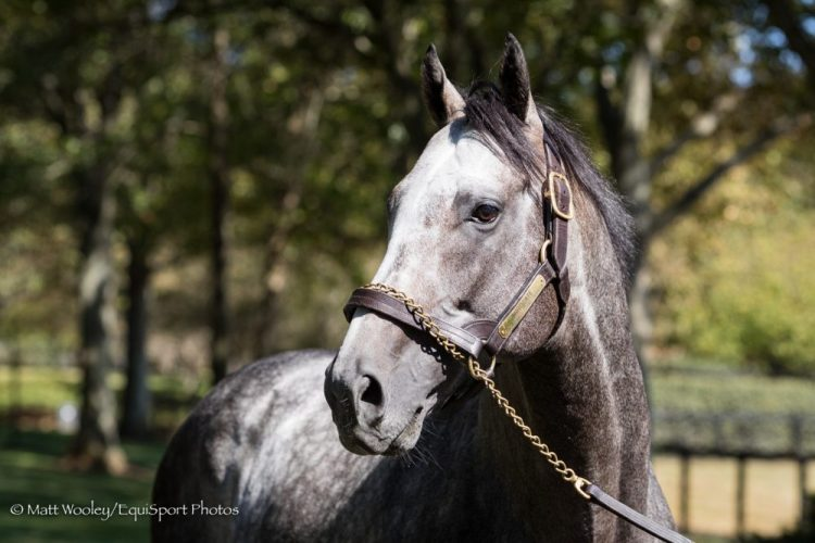 Arrowgate Euthanized at age 7