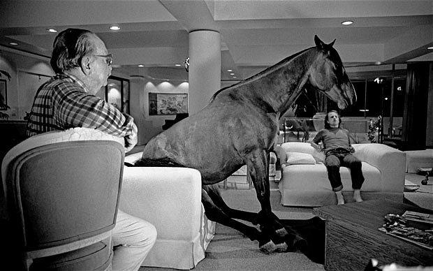 funny horse photo