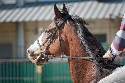horse looking uncomfortable in bit