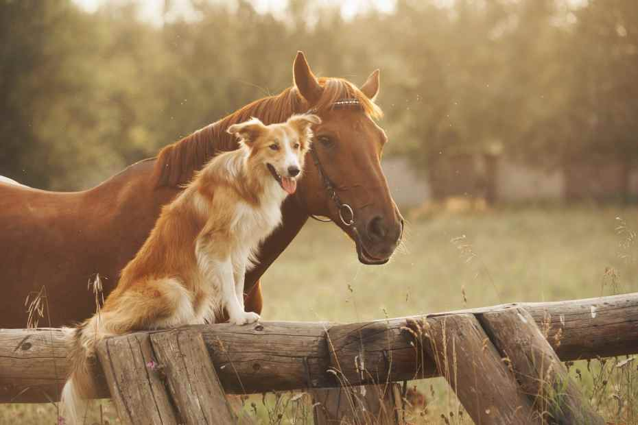 a horse and his dog