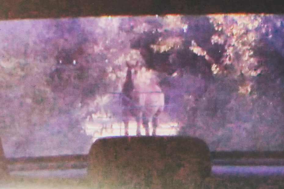 Scottie in my rear view mirror