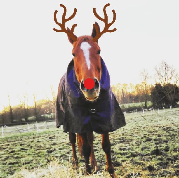 scottie the reindeer