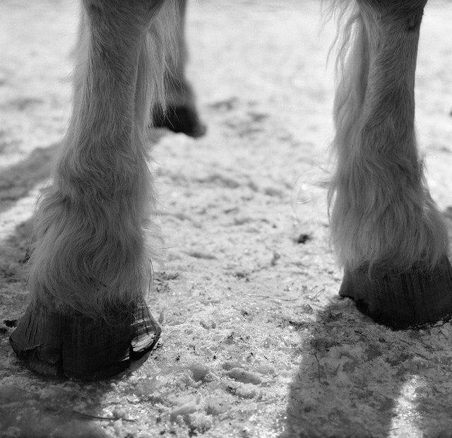 poor quality feet