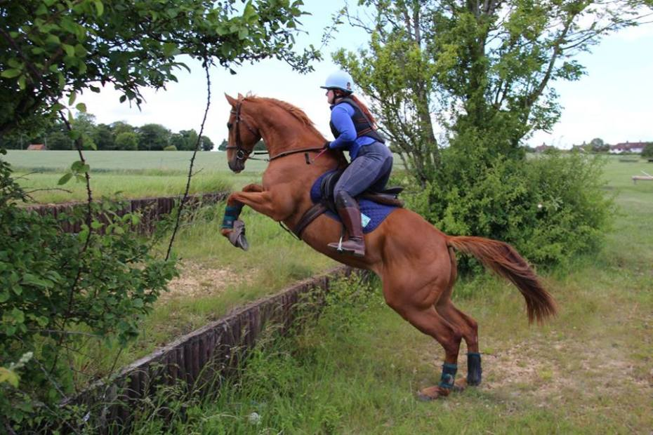 Scottie jumping steps cross country. buying an ex racehorse