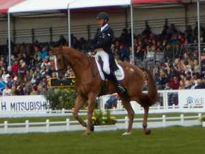 you can ride BE and BD tests with online dressage. You could be the next andrew and nereo! warmblood for dressage