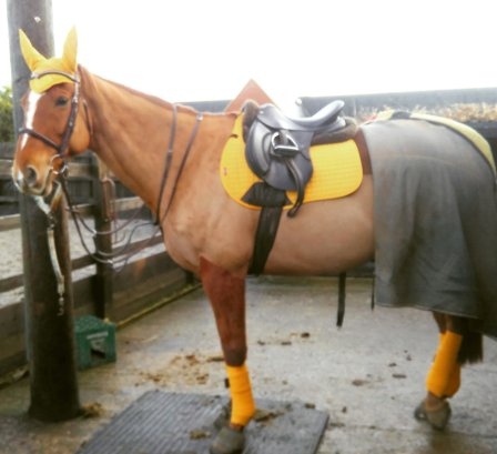 matchy matchy mustard with bandages and wool half pad