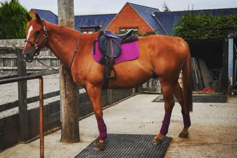 matchy matchy, scottie tacked up in our plum set