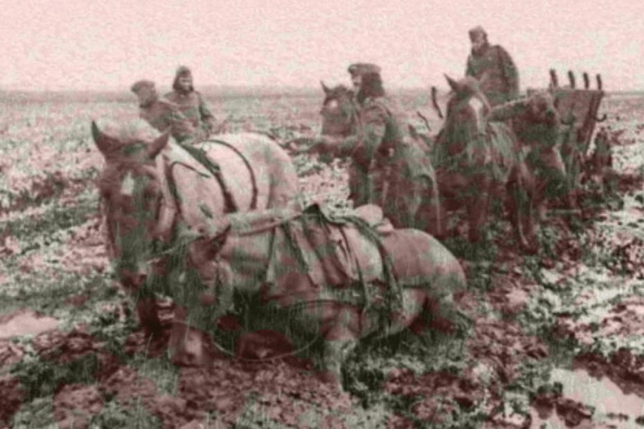 Irish Draught War Horse
