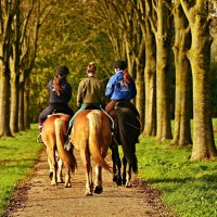 horses out hacking, one rider not wearing a hat, a mistrake riders shouldn't make and is there seism in the equine world