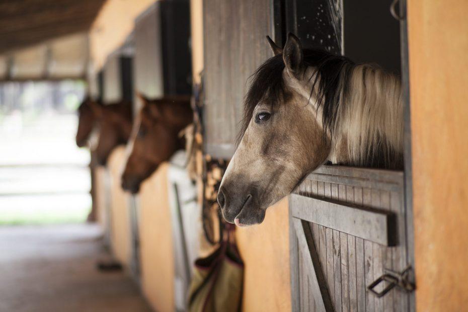 horse talk at the yard, horse attachment behaviour