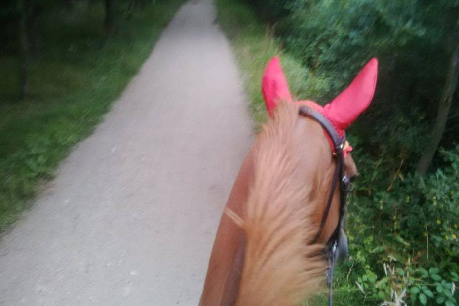should you go hacking after riding
