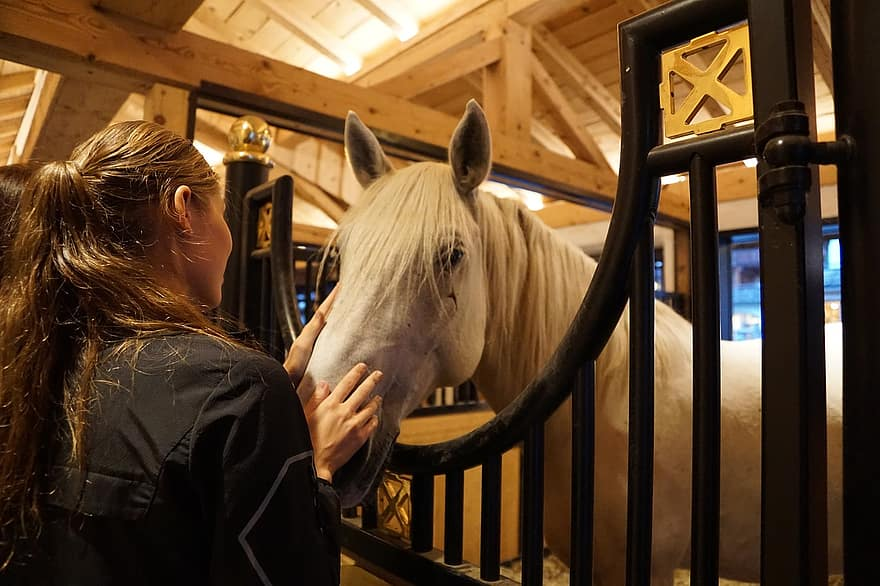 buying a horse is like choosing a partner