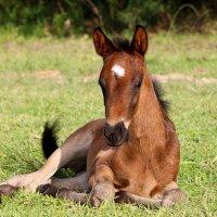 Horse Foal Colt Animal Equine  - cinepaz01 / Pixabay