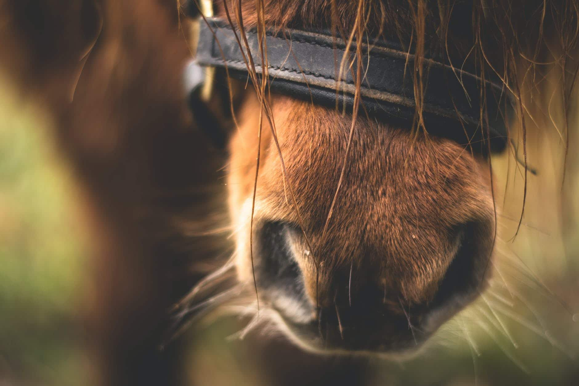 Common allergies in horses