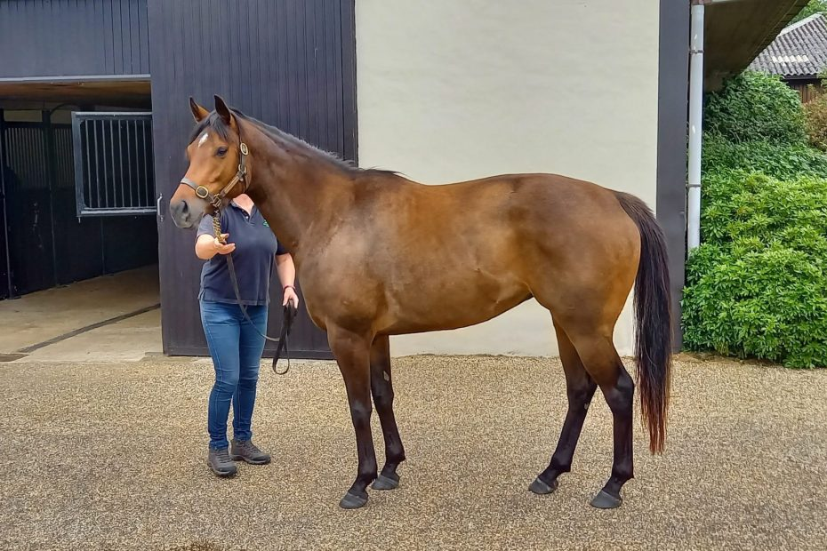 owners group horse cupboard love at stud