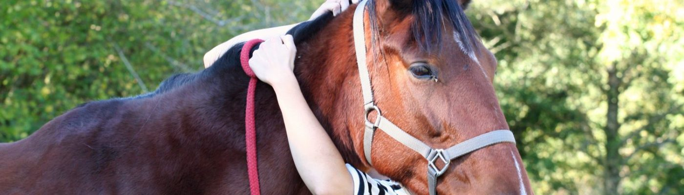Connexion par amour des chevaux