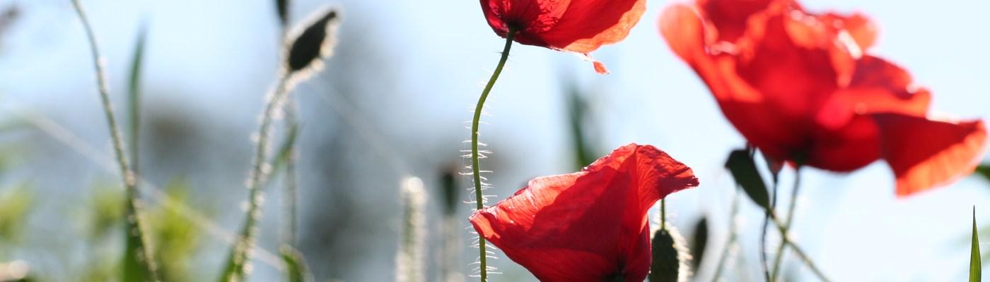 Patûres fleuries à La Roche Mabile