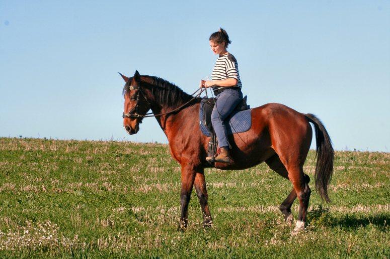 Découvrez une équitation holistique