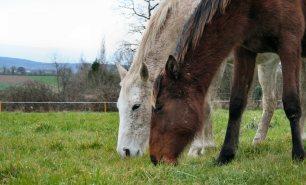 Accompagnement respectueux du jeune cheval