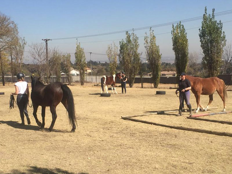 Dually halter training - Monty Roberts Introductory Course of Horsemanship