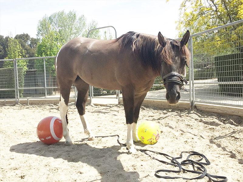 Equiville Horsemanship - horsemanship clinics - spooky horse clinic