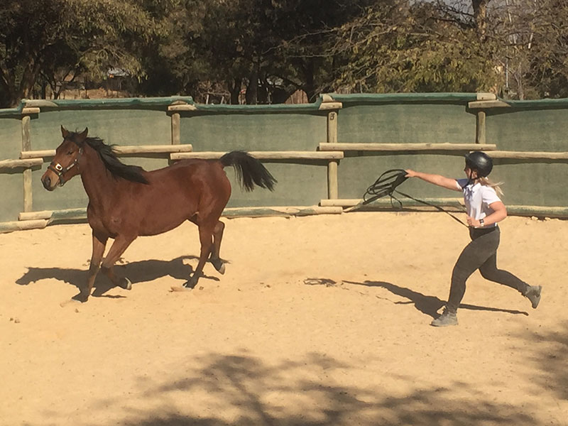 First Steps to Monty Roberts Methods