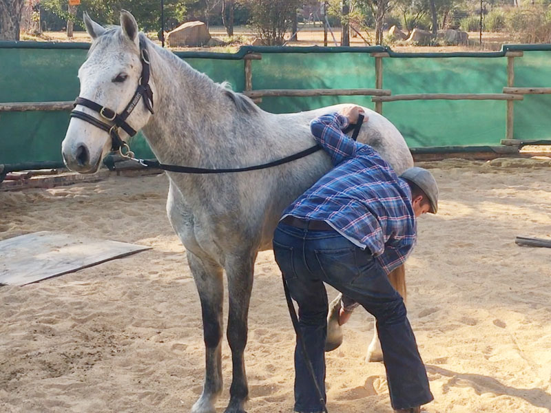 Working with remedial horses - standing for the farrier - horse training by Monty Roberts Certified Instructor