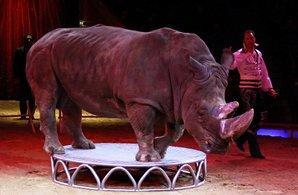 EQUO celebra la decisión de las cuatro provincias catalanas de rechazar la presencia de animales en los circos
