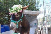 Aitana's Easter bonnet