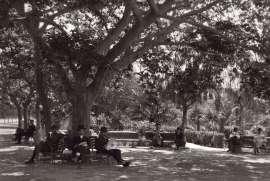 016 - Αθήνα - Ζάππειο 1920
