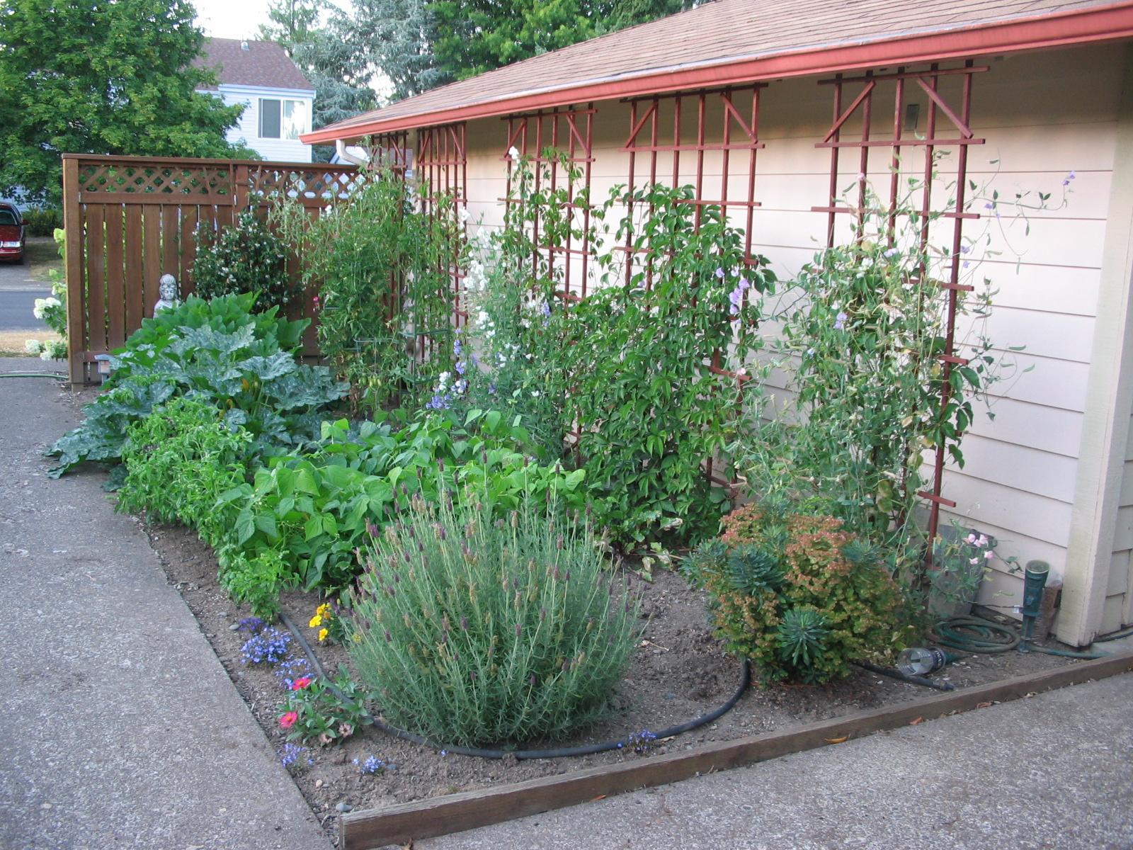 Squash, basil, lavender, euphorbia, jasmine - 2008
