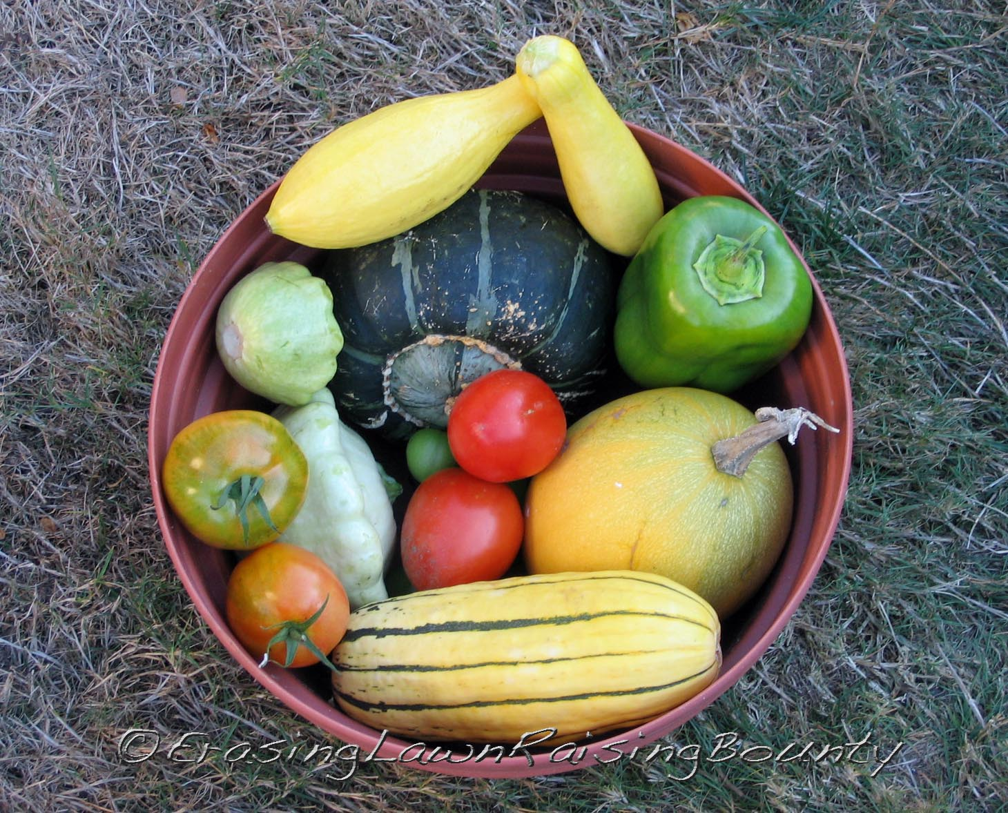 """Final samplings of squash, tomatoes, and peppers.  Clockwise from yellow summer squash resting on top of darker buttercup squash: """"yellow"""" pepper, spaghetti squash, delicata squash, patty-pan squash, with ripening tomatoes nestled among squash."""