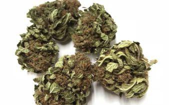 cime di lemon haze marijuana light