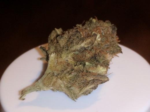 Infiorescenza di Seven Hemp cannabis light legale Orange Crash