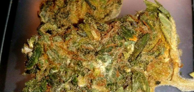 Recensione Acapulco Gold MEC Cannabis