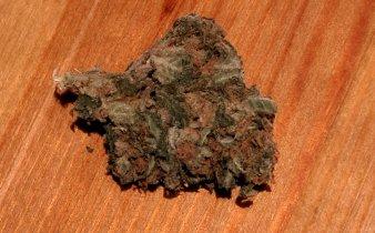 Black Widow di Mec Cannabis, il fiore