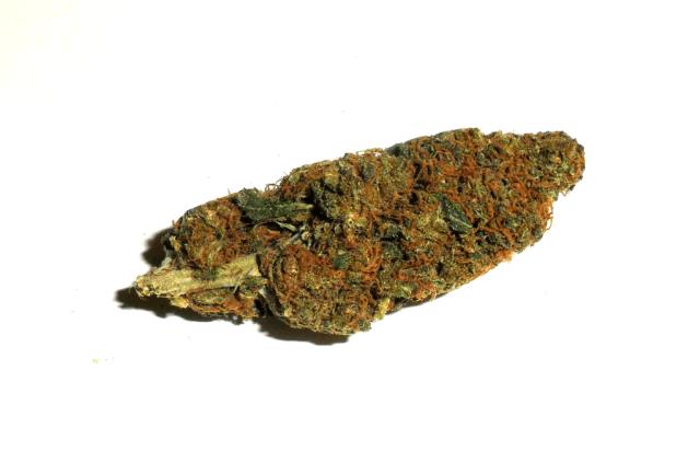 Infiorescenza di canapa legale Orange Weed