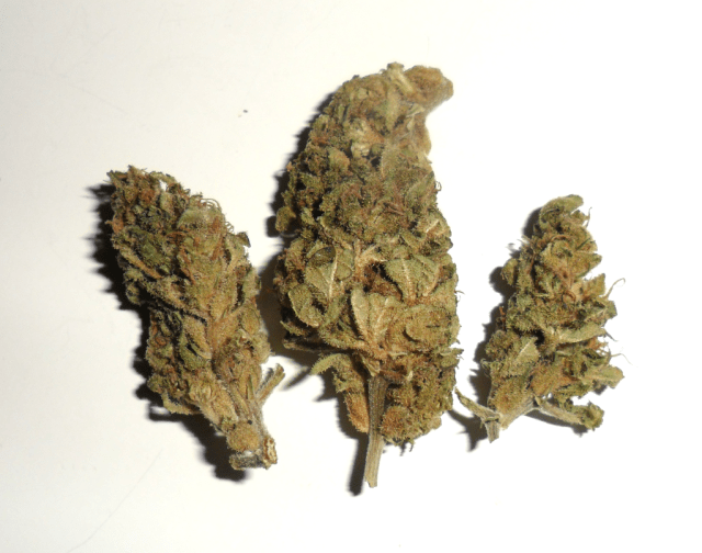 Infiorescenza femminile di cannabis light Gorilla Glue di CBWeed