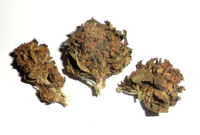 Infiorescenza femminile di cannabis light Gorilla Mandarine di Sensi Break
