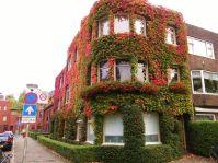 Groningen, bij Petrus Campersingel