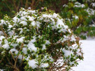 Winter 2017 - Sneeuw in Noordhorn (1)