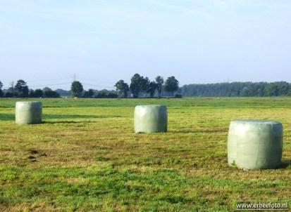 Platteland Boerakker Augustus 2017 11