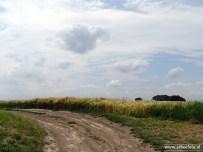 Landschap Electra (Graan)