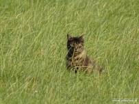 Kat (Den Ham)