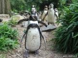 Aqua Zoo (Leeuwarden) 14