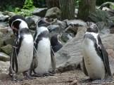Aqua Zoo (Leeuwarden) 16