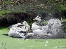 Aqua Zoo (Leeuwarden) 43